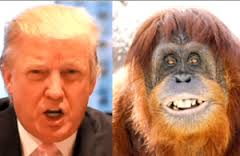 Donald the Orangutan