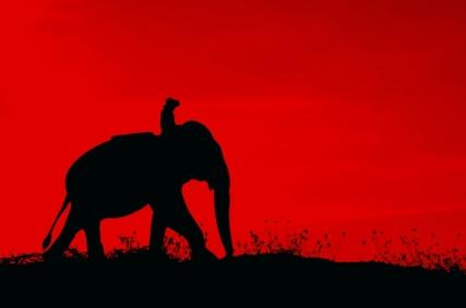 Rider_elephant